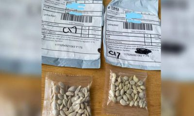 Sample of mysterious packages containing seeds. (Source: Washington State Department of Agriculture via Clemson)